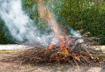 Fire burning dry tree branches